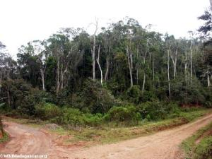 mantady_forest_road0093