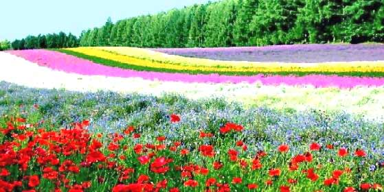 flower-garden-01